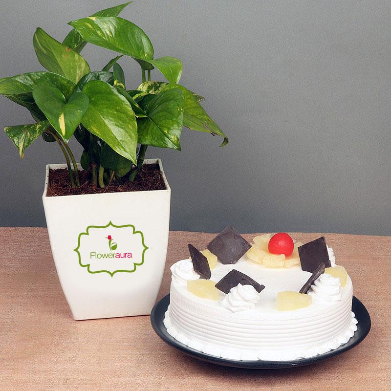 Money Plant with Pineapple Cake