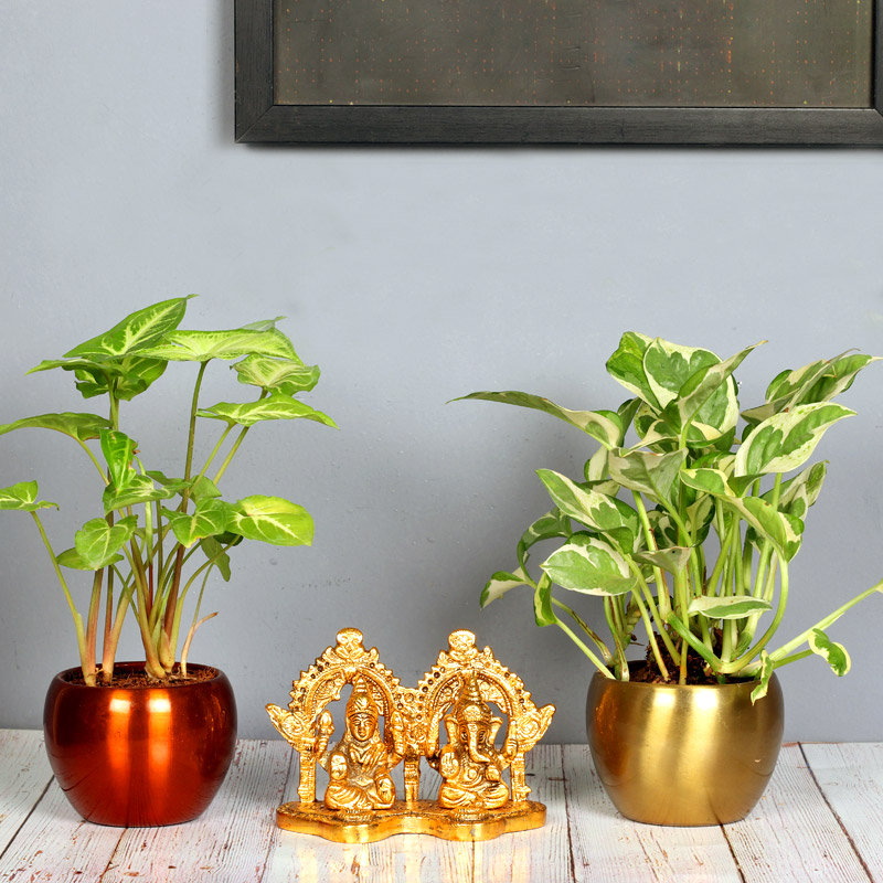 Syngonium Blessings Combo - Foliage Plant Indoors in Orchid Mini Vase with 2 Inch Brass Laxmi Ganesha Idol