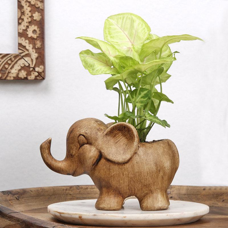 Syngonium Houseplant Plant