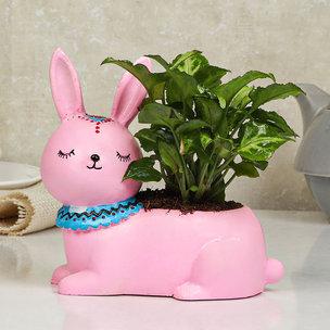 Syngonium Plant N Vase
