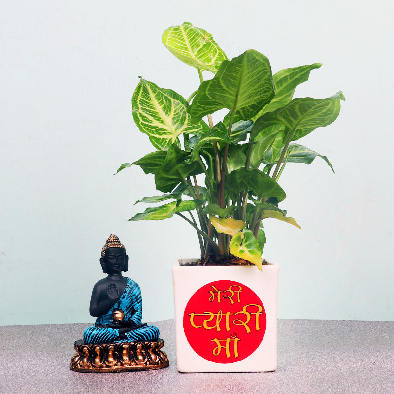 Syngonium Plant with Lord Buddha Statue for Mom