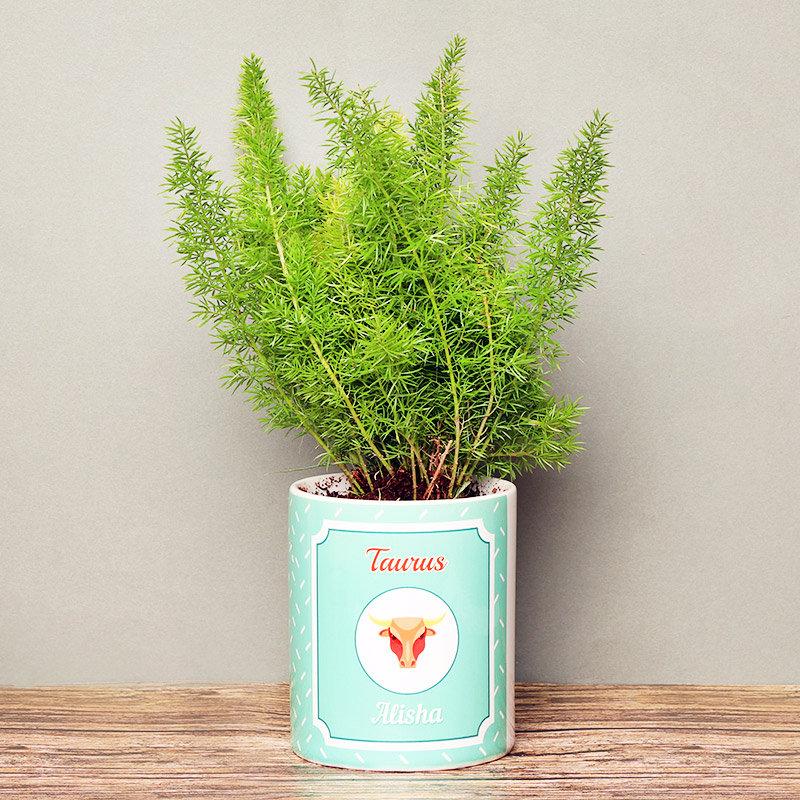 Personalised Aspargus Plant for Taurus People