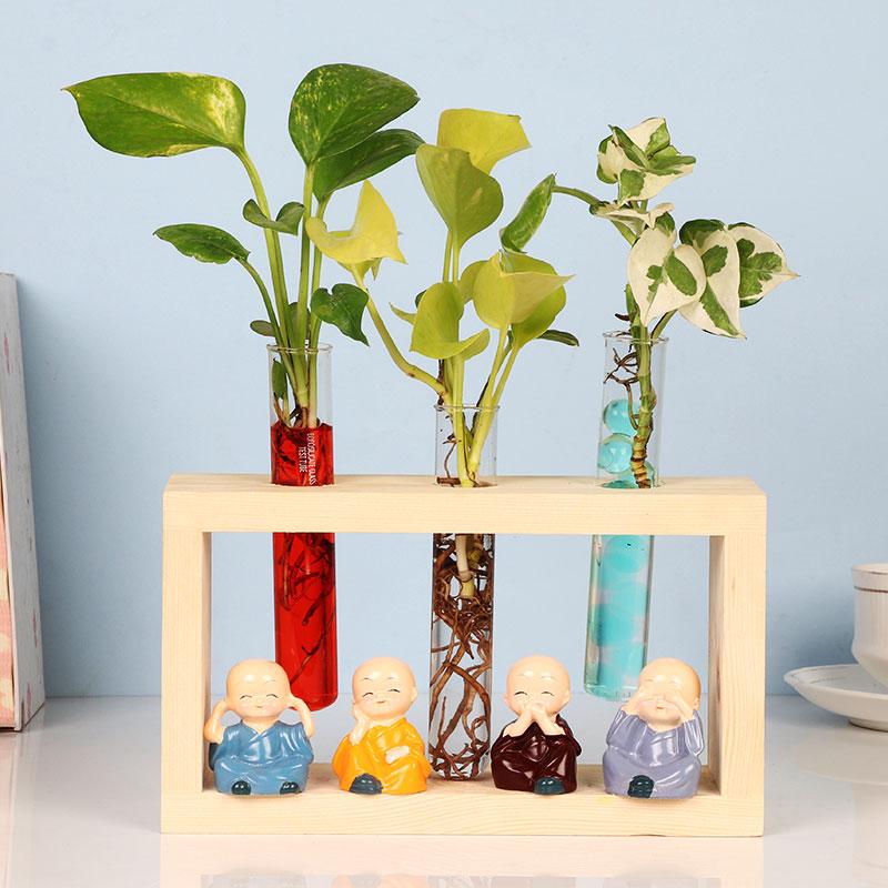 Buy Test Tube Plants Online Trio