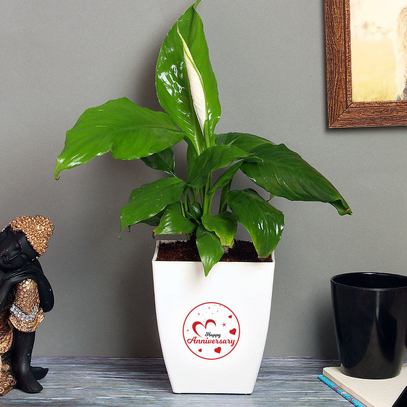 Token Of Peaceful Love - Air Purifying Indoors Plant in Floweraura Chatura Vase