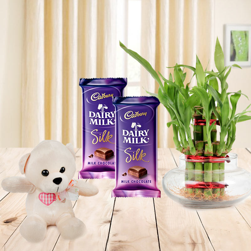 Combo of 2 cadbury silk chocolates with 2 Layer bamboo plant and a teddy