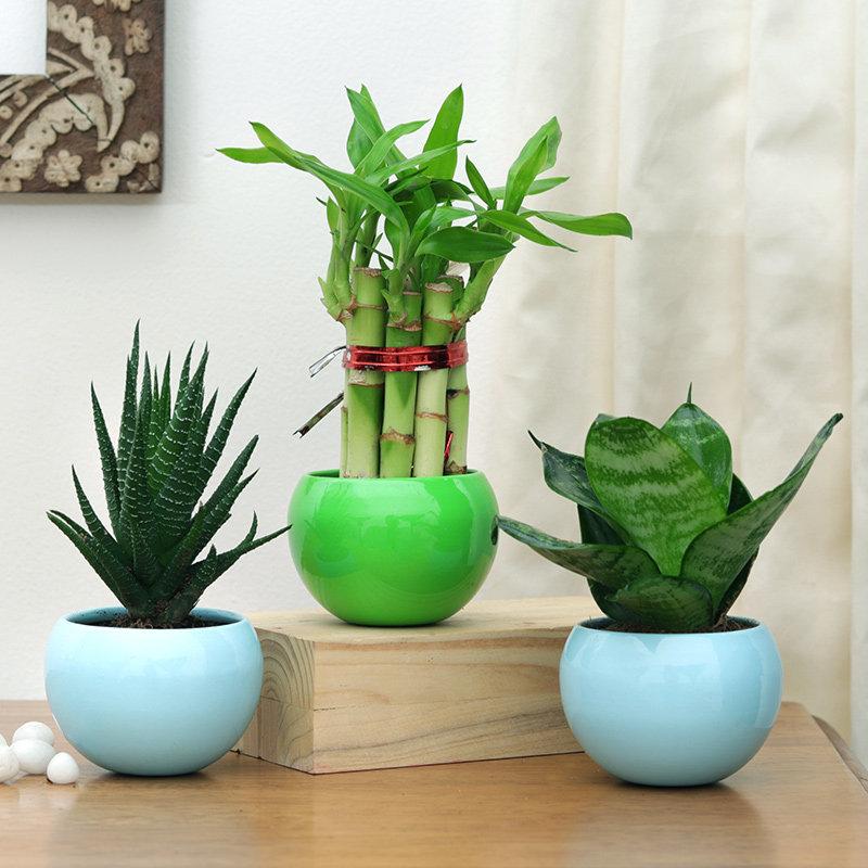Trio Of Fresh Plants