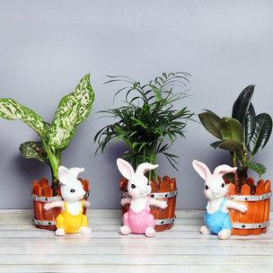 Triplet Air Purifying Plants