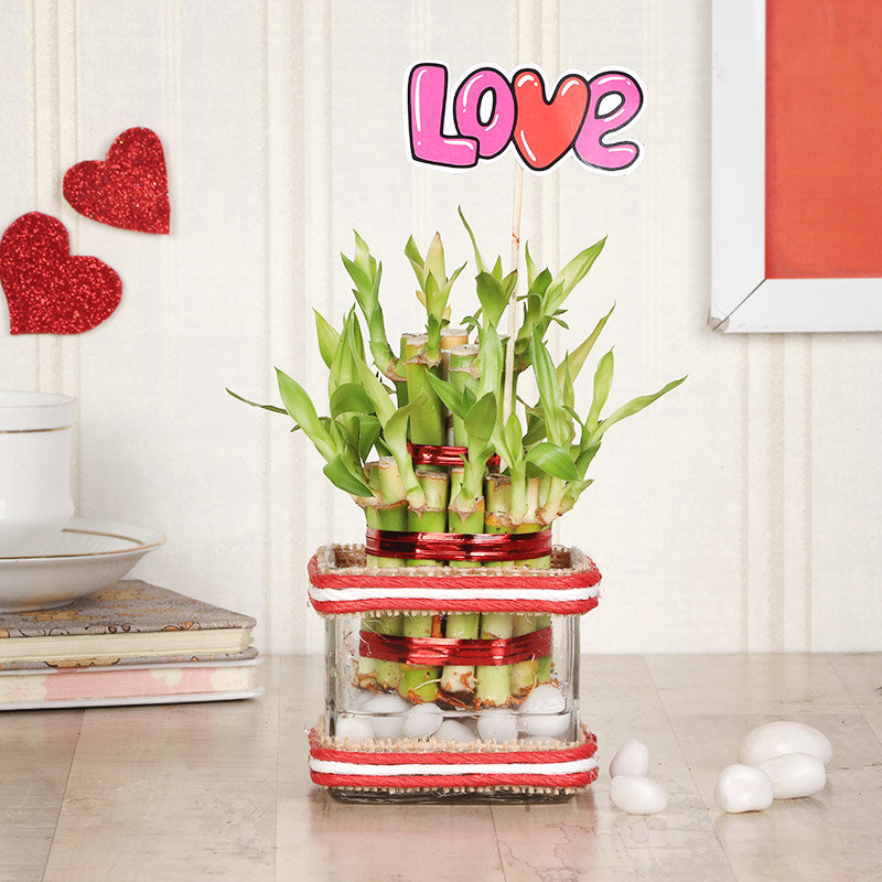 Two Layer Bamboo Love