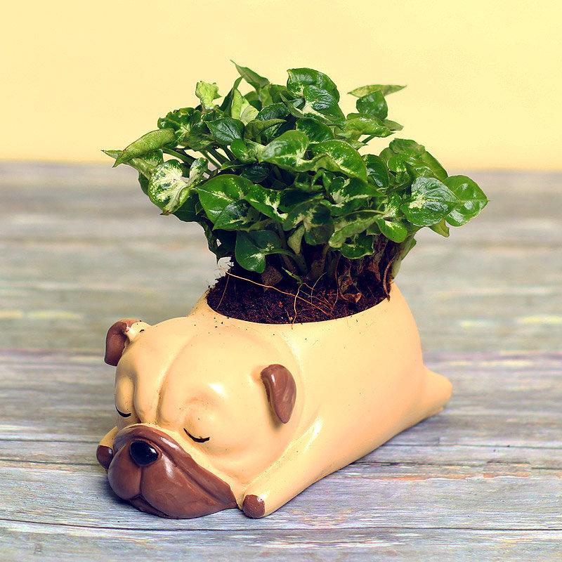 Syngonium Dwarf Plant in Dog Shaped Vase