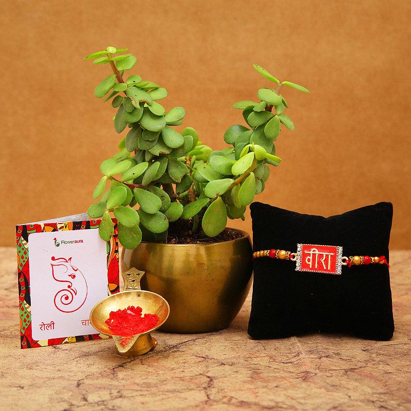 Veera Rakhi N Jade Plant