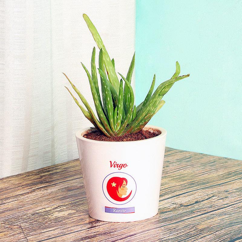 Aloe Vera Plant in Personalised Vase for Virgo People