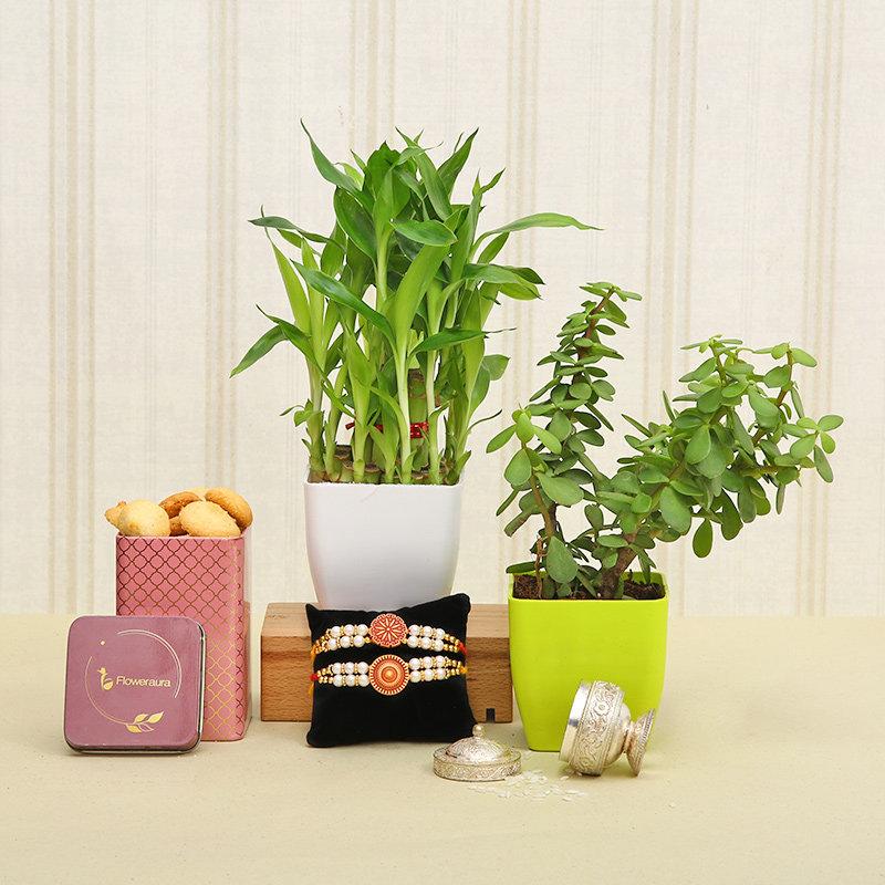 Wishful Rakhi Plant And Cookie Combo