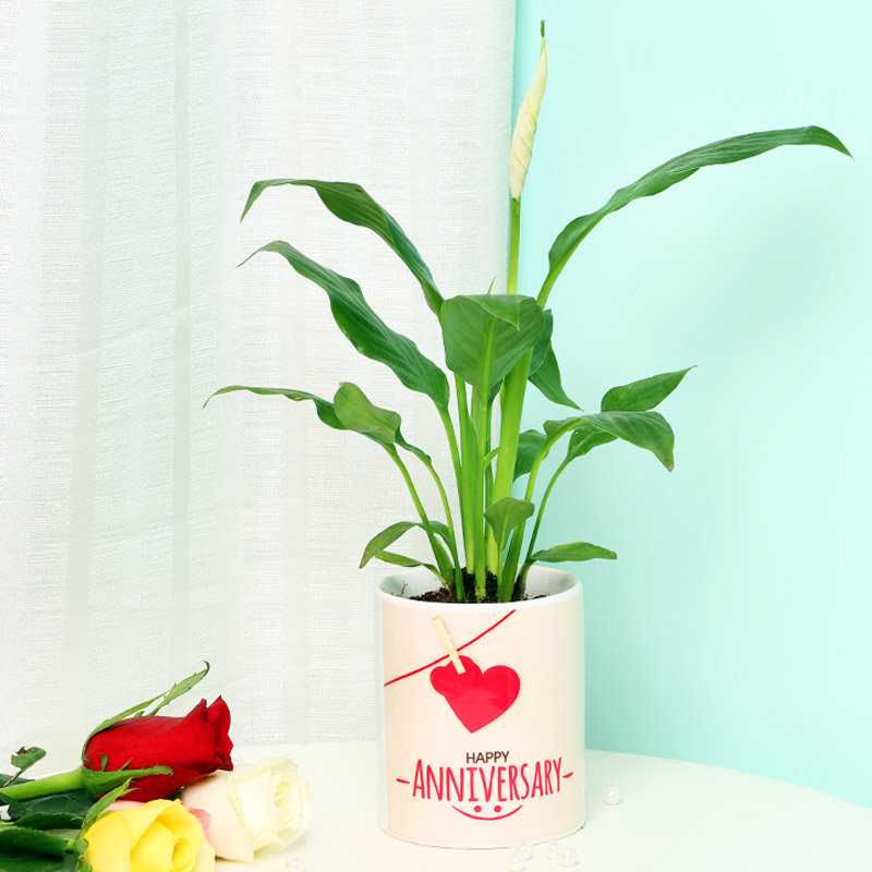 Peace Lily Plant in Personalised Anniversary Mug