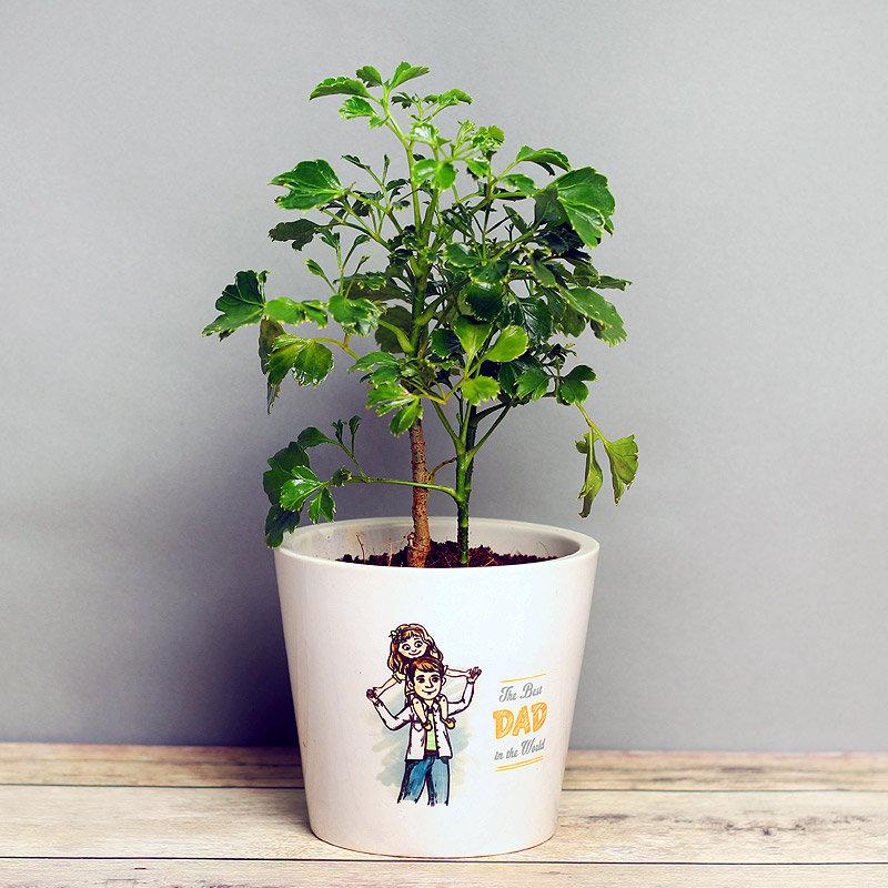 Green Aralia Plant in White Vase for Dad